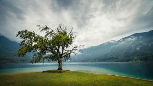 Storm over the lake with an old tree