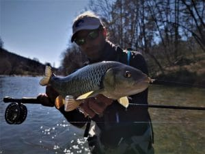 fly fishing on Savinja river in the spring can be very productive