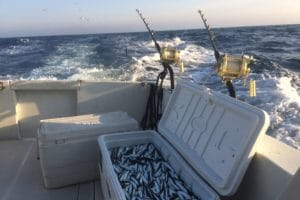 full box of bait mean to attract tuna closer to the boat